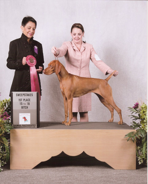 Mehagian's Amber-eyed sol. owned by Roger & Janet Laman at 2010 Vizsla Club of America Nationals