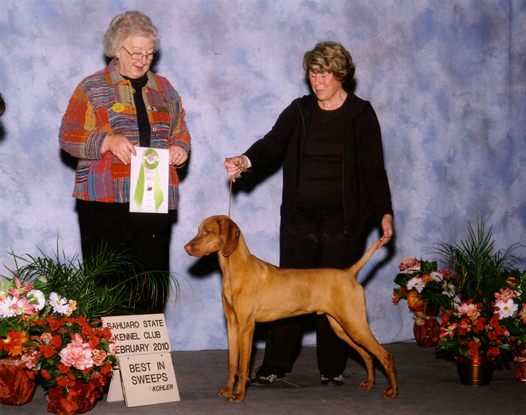 "Mehagian's Tobias of Wilder (""Toby"") ""Best in Sweeps"" at Sahuara State Kennel Club"